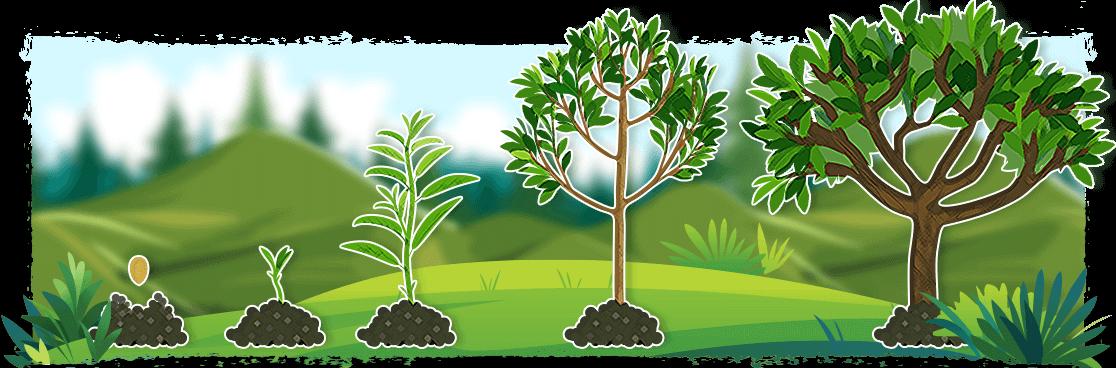 bewertungswald-evolution