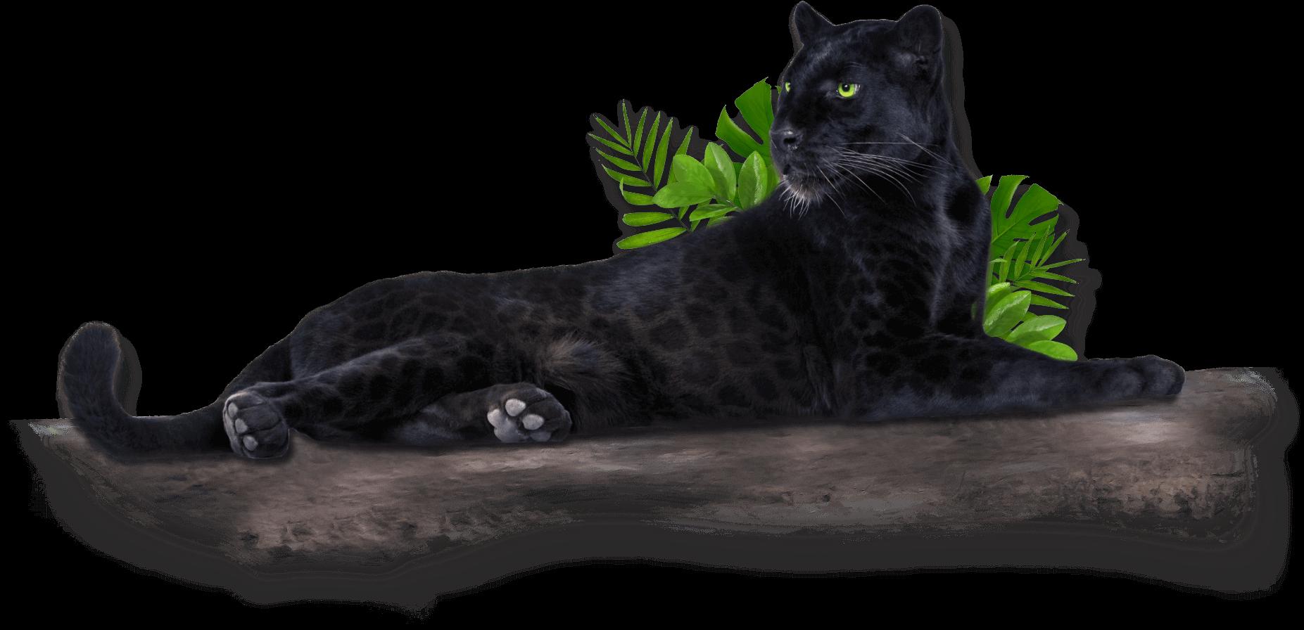 wwf-jaguar